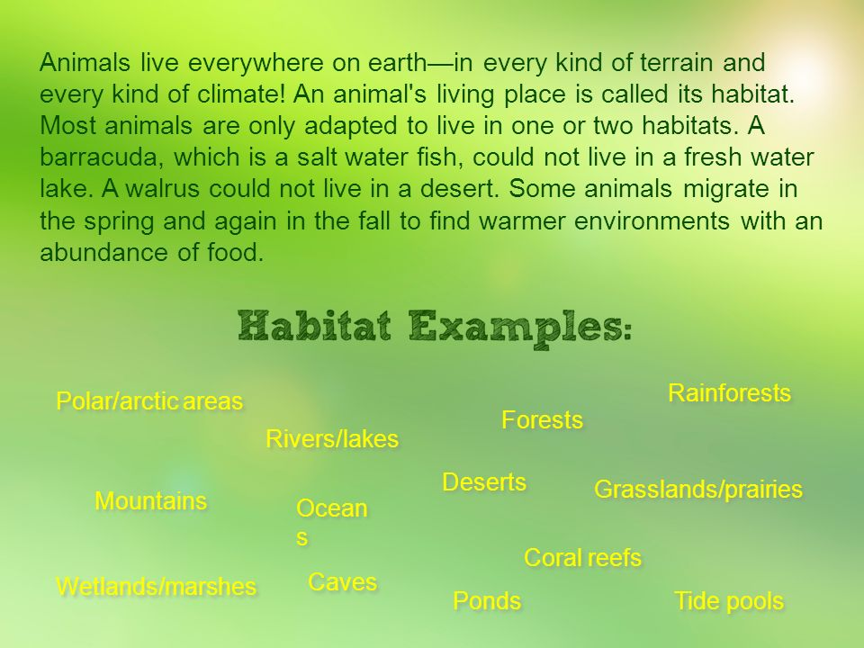 Animals live everywhere on earth—in every kind of terrain and every kind of climate! An animal s living place is called its habitat. Most animals are only adapted to live in one or two habitats. A barracuda, which is a salt water fish, could not live in a fresh water lake. A walrus could not live in a desert. Some animals migrate in the spring and again in the fall to find warmer environments with an abundance of food.