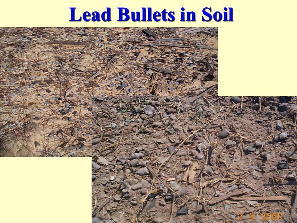 Lead Bullets in Soil