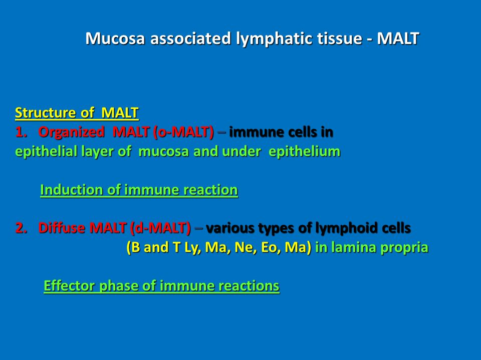 Mucosa associated lymphatic tissue - MALT