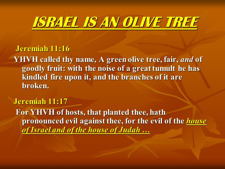 ISRAEL IS AN OLIVE TREE Jeremiah 11:16