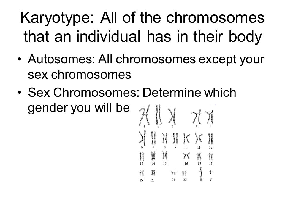 Karyotype: All of the chromosomes that an individual has in their body