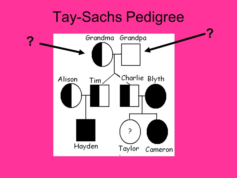 Tay-Sachs Pedigree