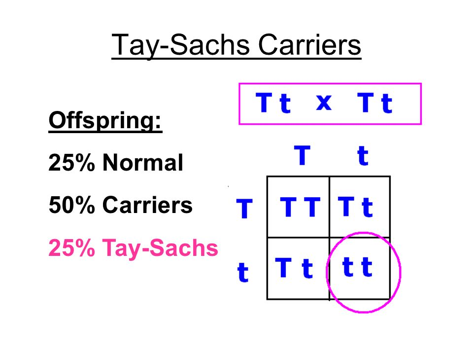 Tay-Sachs Carriers Offspring: 25% Normal 50% Carriers 25% Tay-Sachs