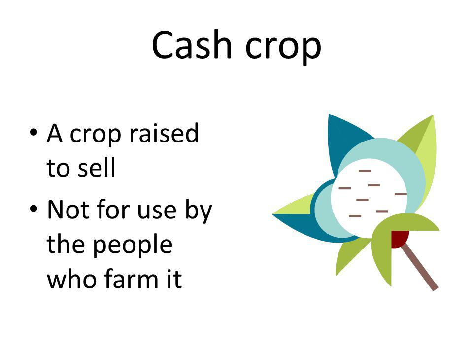 Cash crop A crop raised to sell Not for use by the people who farm it