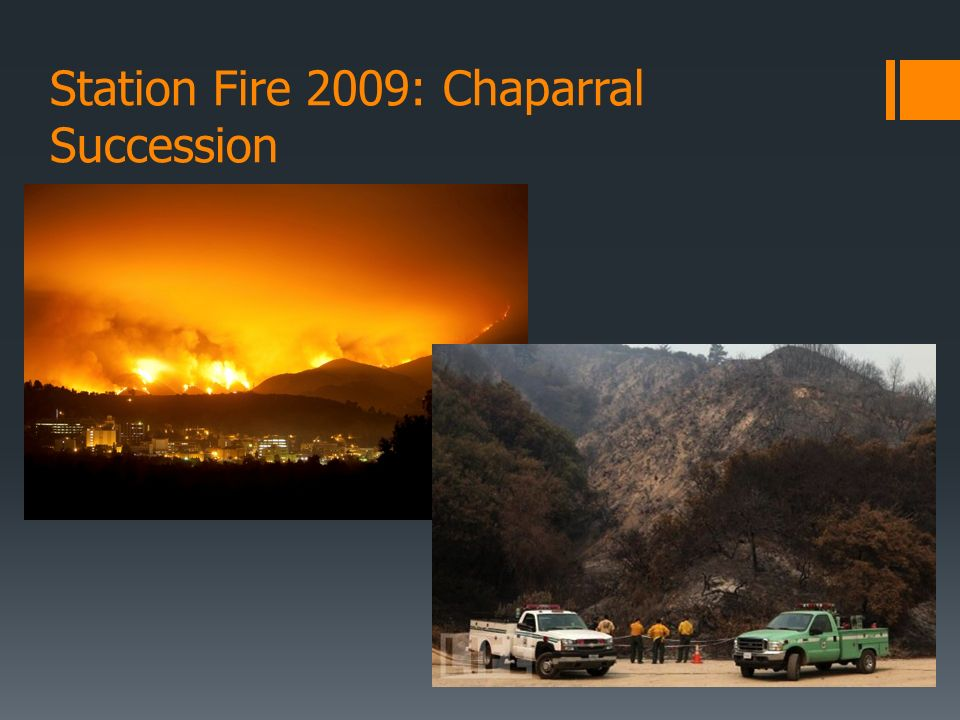 Station Fire 2009: Chaparral Succession