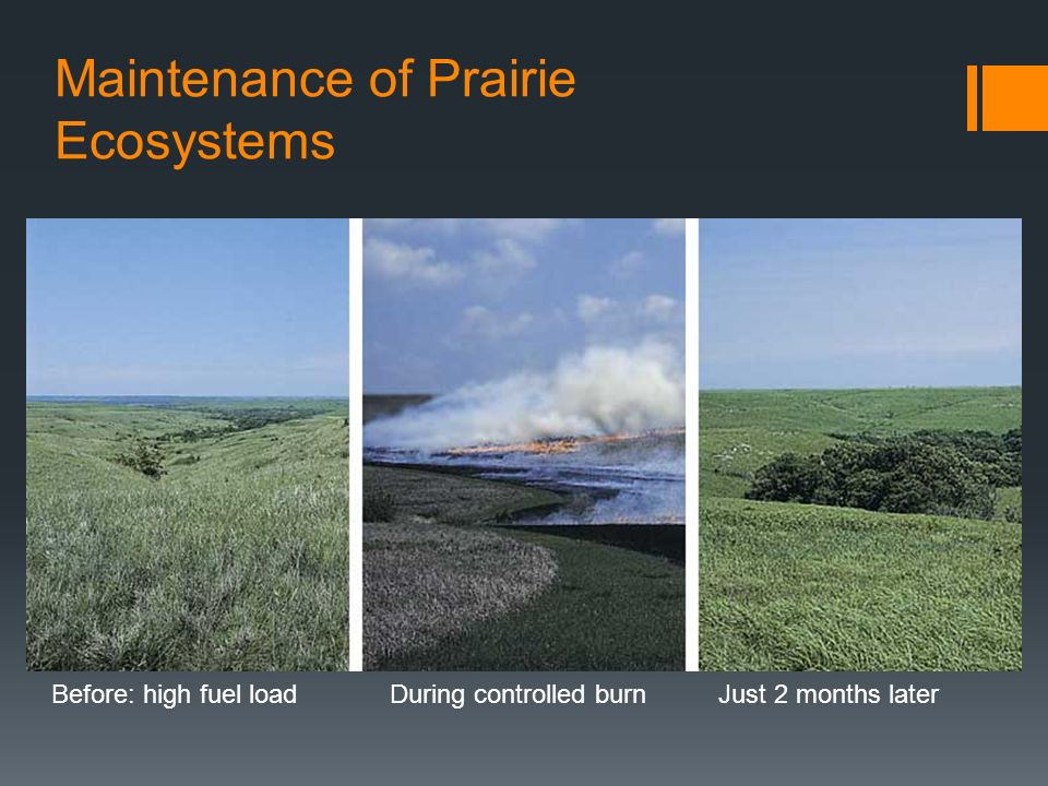Maintenance of Prairie Ecosystems