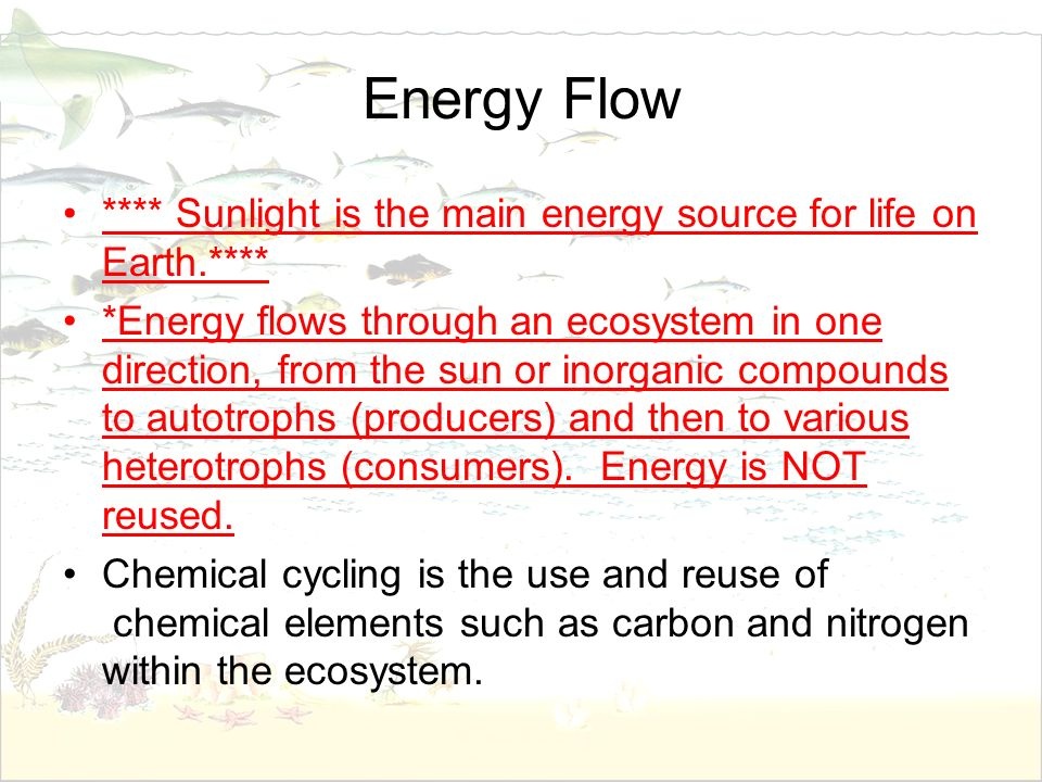 Energy Flow **** Sunlight is the main energy source for life on Earth.****