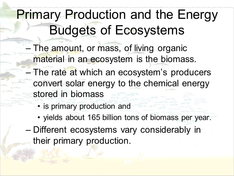 Primary Production and the Energy Budgets of Ecosystems