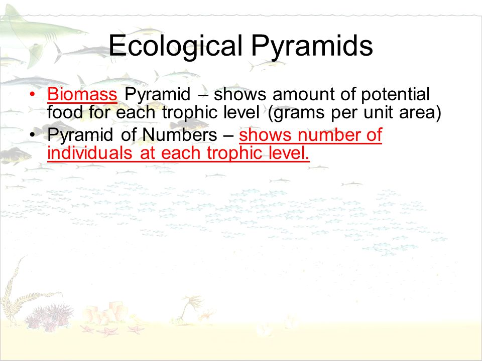 Ecological Pyramids Biomass Pyramid – shows amount of potential food for each trophic level (grams per unit area)