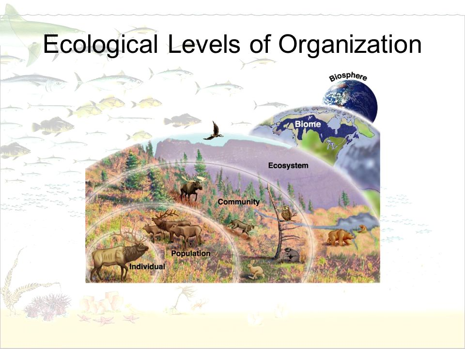 Ecological Levels of Organization