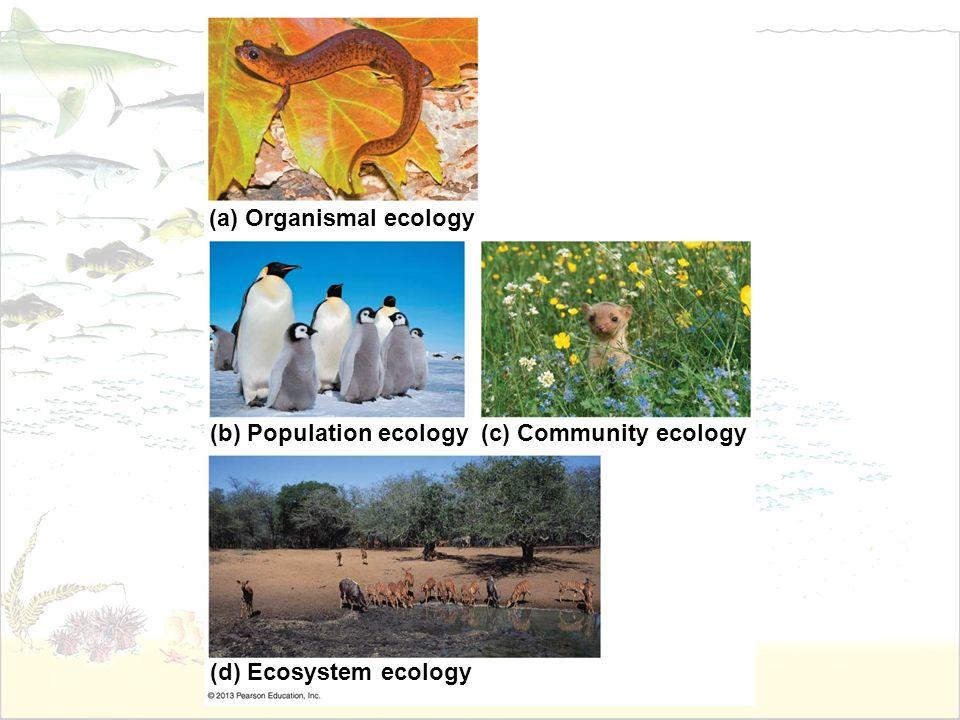 (a) Organismal ecology