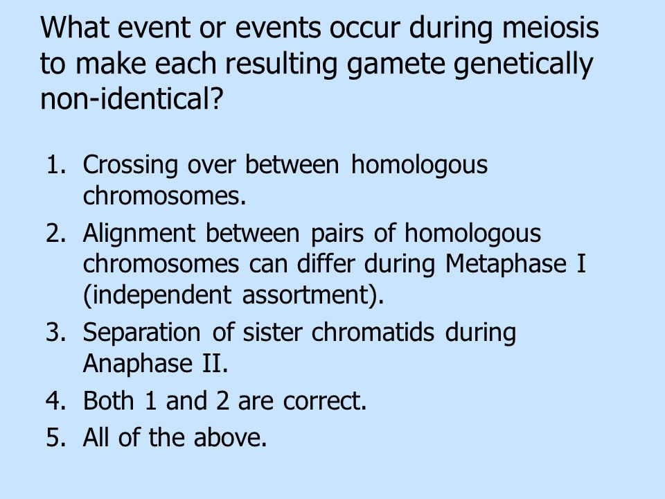 What event or events occur during meiosis to make each resulting gamete genetically non-identical