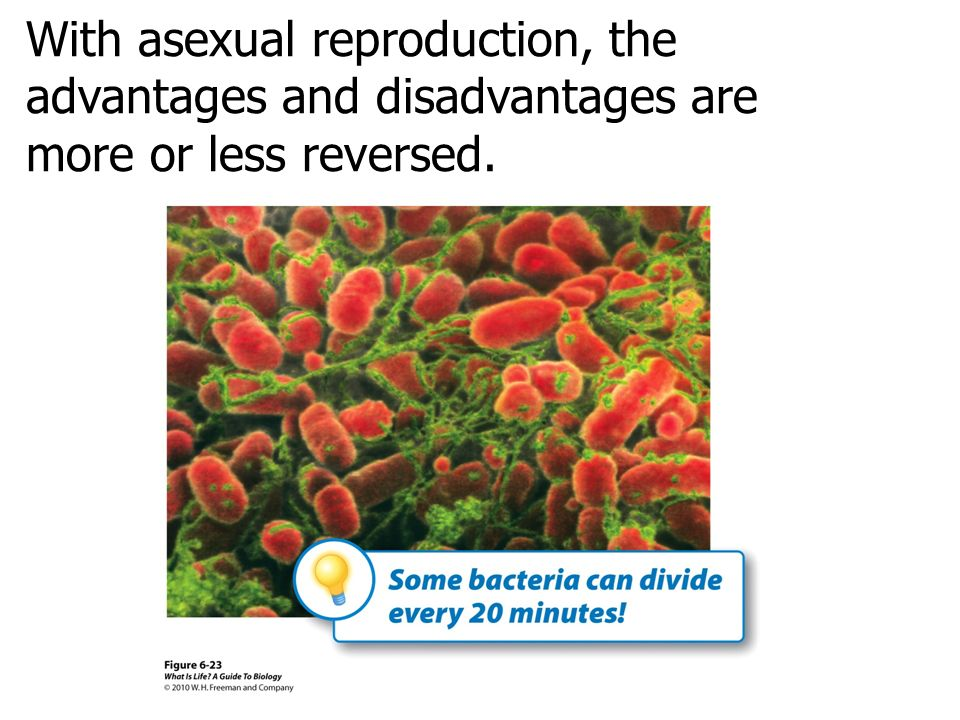 With asexual reproduction, the advantages and disadvantages are more or less reversed.