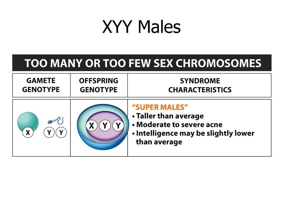 XYY MalesXYY males.