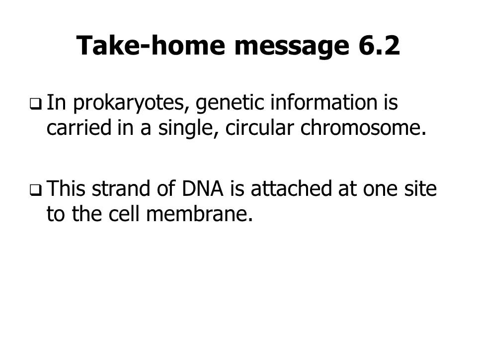 Take-home message 6.2 In prokaryotes, genetic information is carried in a single, circular chromosome.