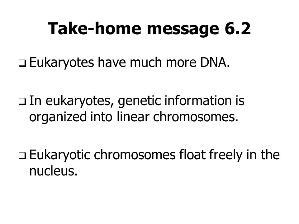 Take-home message 6.2 Eukaryotes have much more DNA.