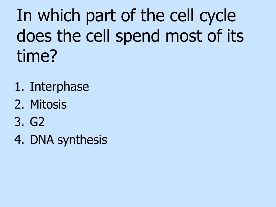 In which part of the cell cycle does the cell spend most of its time