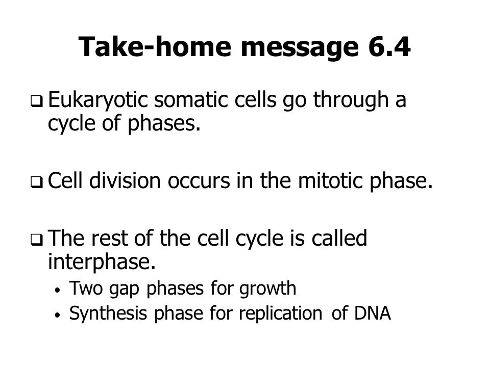 Take-home message 6.4 Eukaryotic somatic cells go through a cycle of phases. Cell division occurs in the mitotic phase.