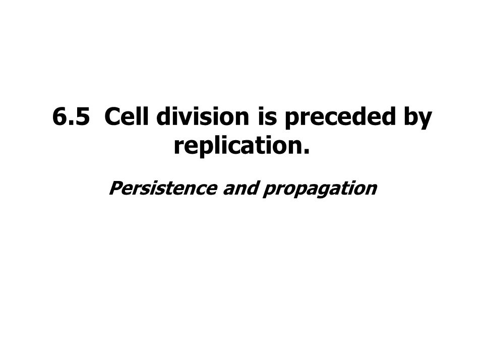 6.5 Cell division is preceded by replication.