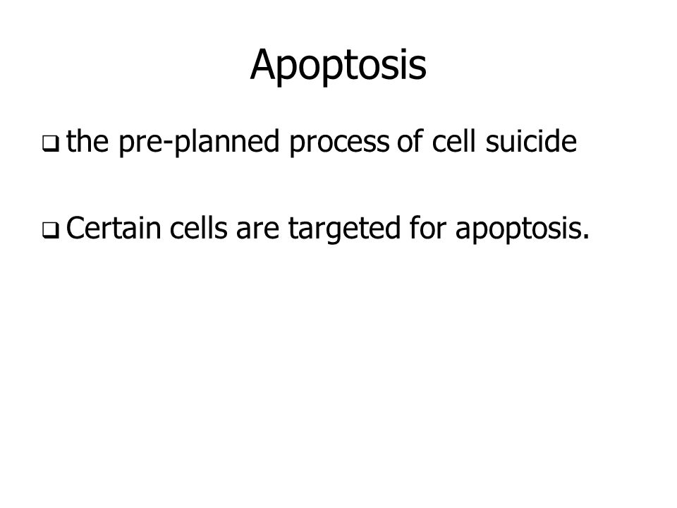 Apoptosis the pre-planned process of cell suicide