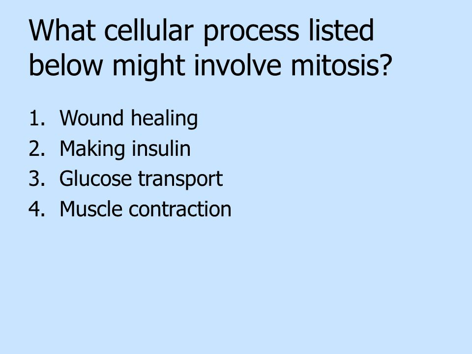 What cellular process listed below might involve mitosis