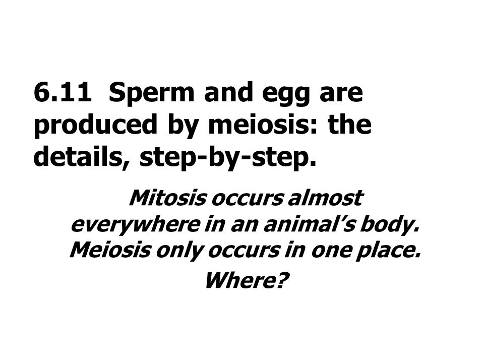 6.11 Sperm and egg are produced by meiosis: the details, step-by-step.
