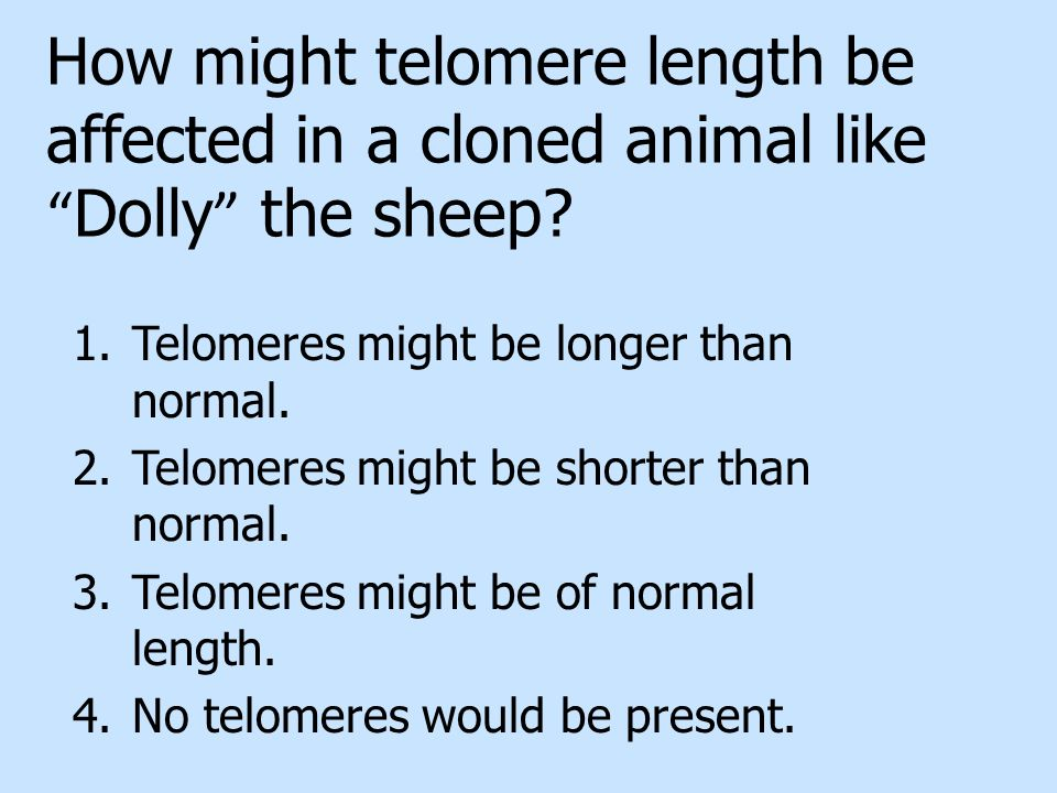 How might telomere length be affected in a cloned animal like Dolly the sheep