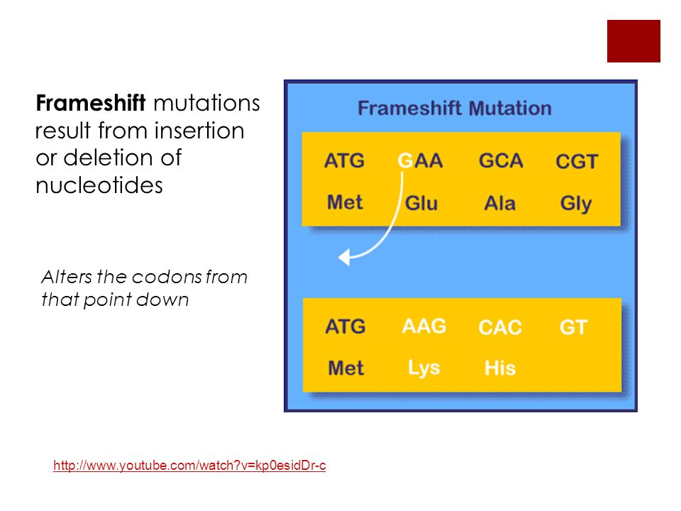 Frameshift mutations result from insertion or deletion of nucleotides