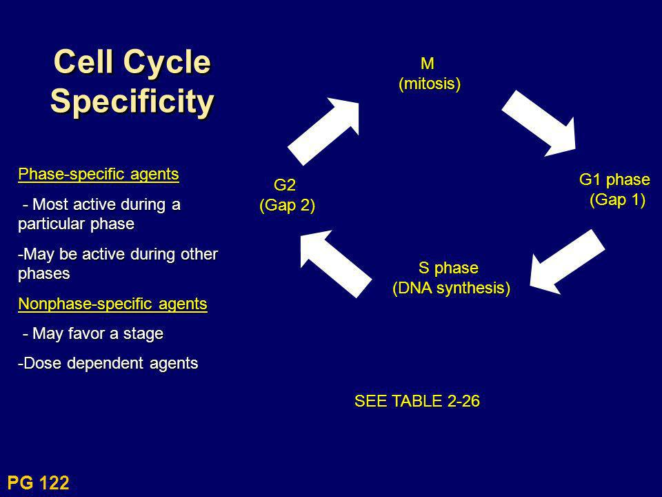 Cell Cycle Specificity