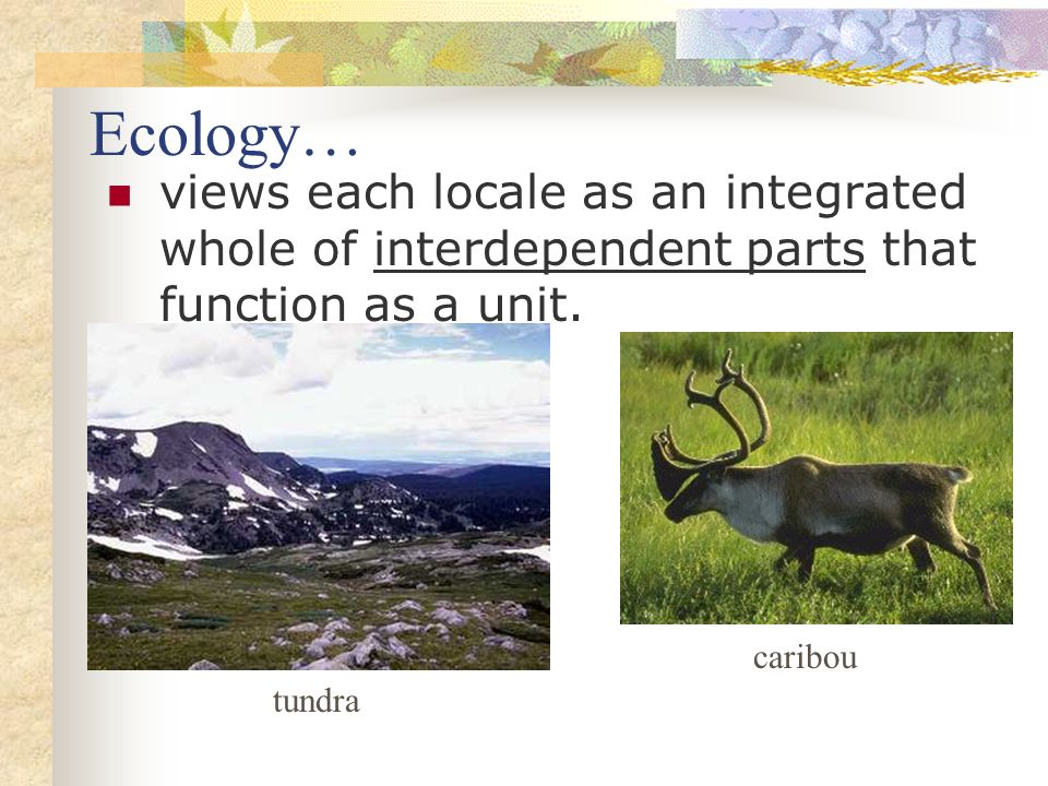 Ecology… views each locale as an integrated whole of interdependent parts that function as a unit. caribou.