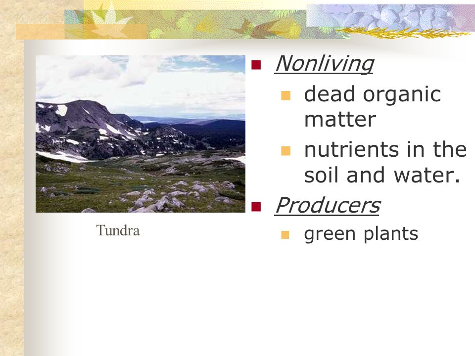 nutrients in the soil and water. Producers