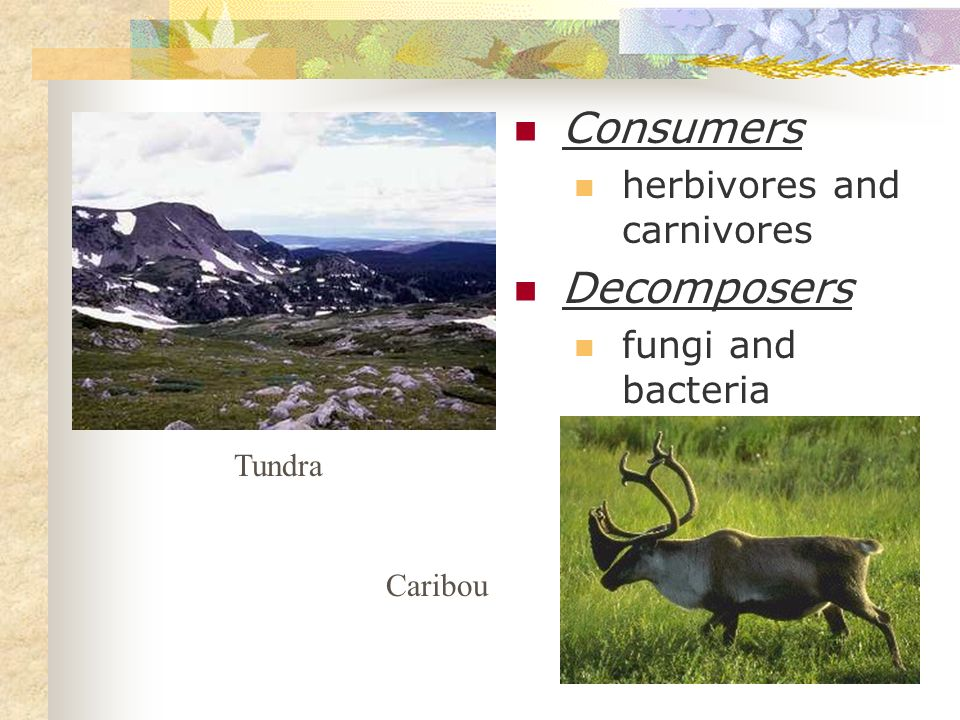 Consumers Decomposers herbivores and carnivores fungi and bacteria