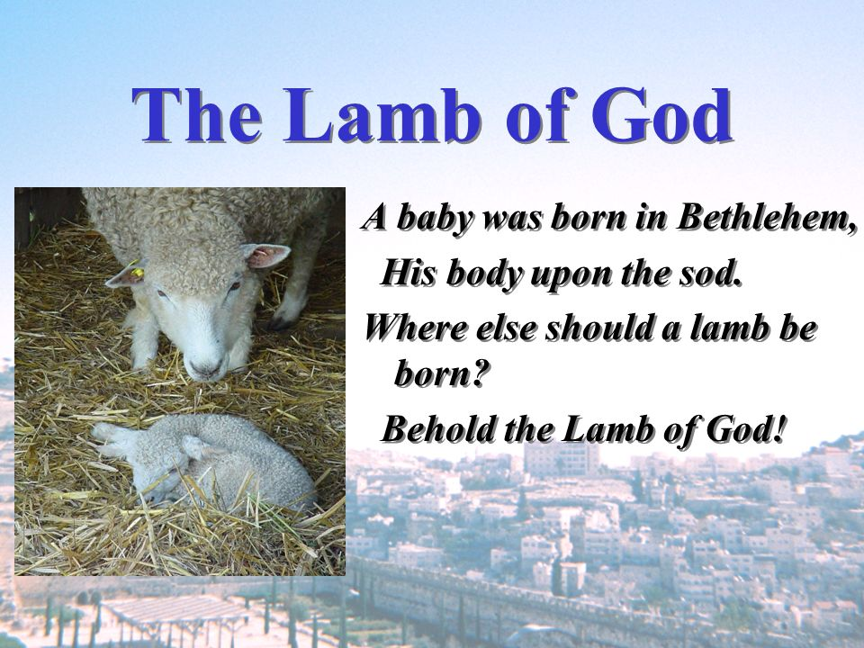 The Lamb of God A baby was born in Bethlehem, His body upon the sod.