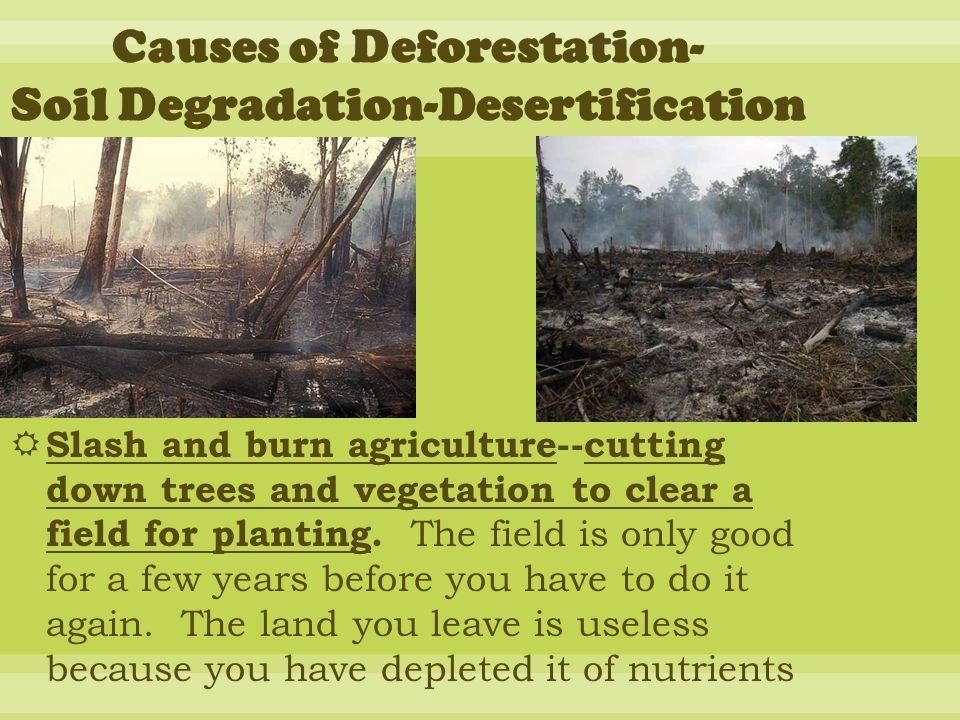 Causes of Deforestation- Soil Degradation-Desertification