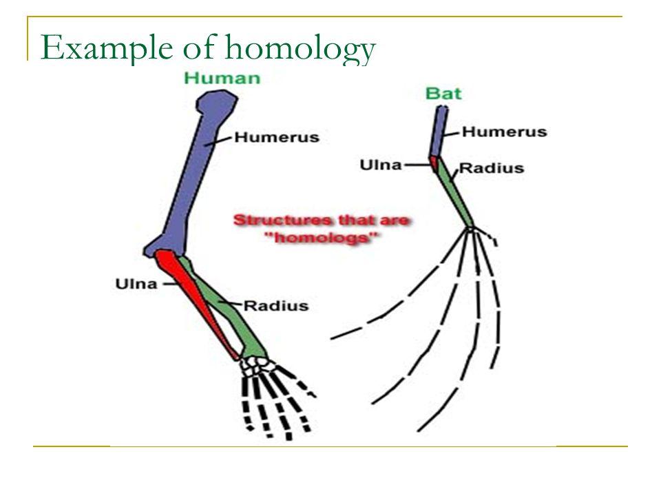 Example of homology
