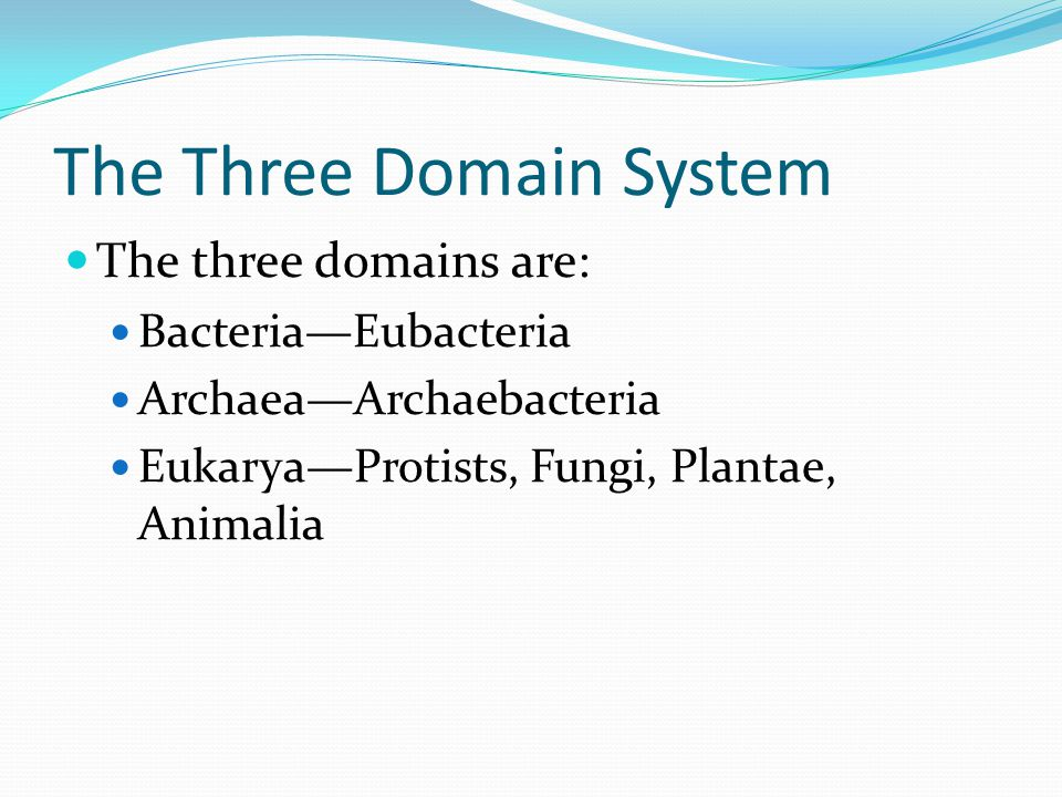 The Three Domain System