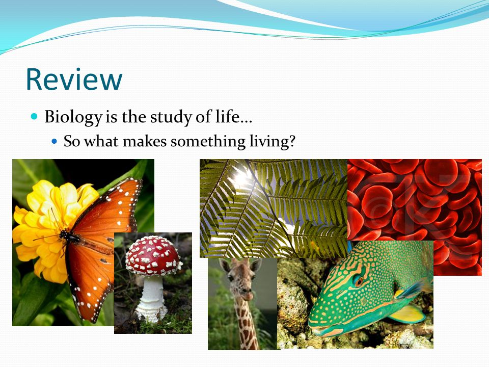 Review Biology is the study of life… So what makes something living