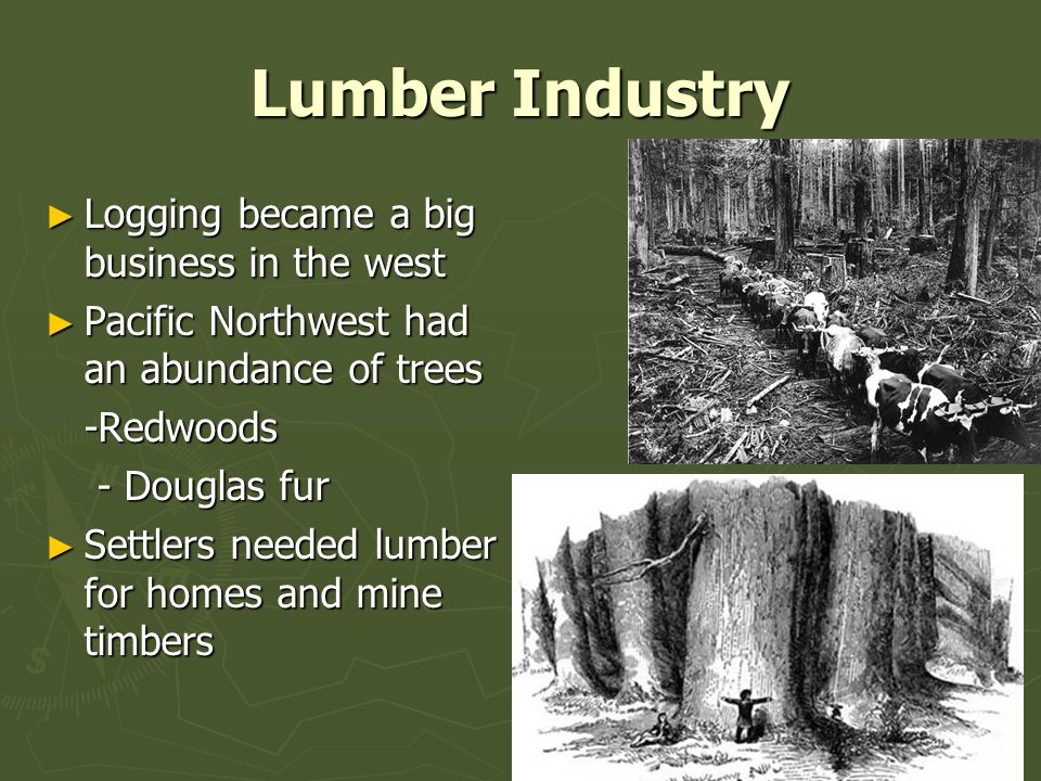 Lumber Industry Logging became a big business in the west