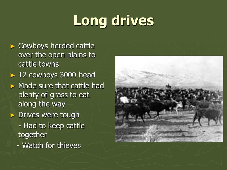 Long drives Cowboys herded cattle over the open plains to cattle towns