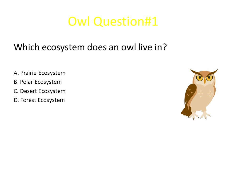 Owl Question#1 Which ecosystem does an owl live in
