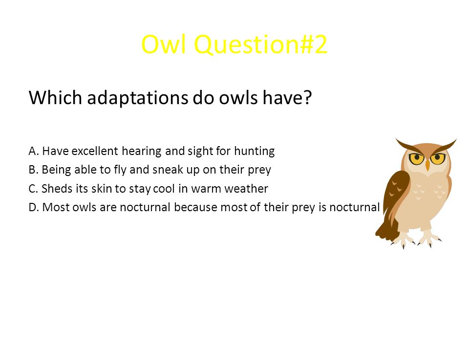 Owl Question#2 Which adaptations do owls have