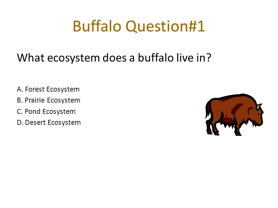 Buffalo Question#1 What ecosystem does a buffalo live in