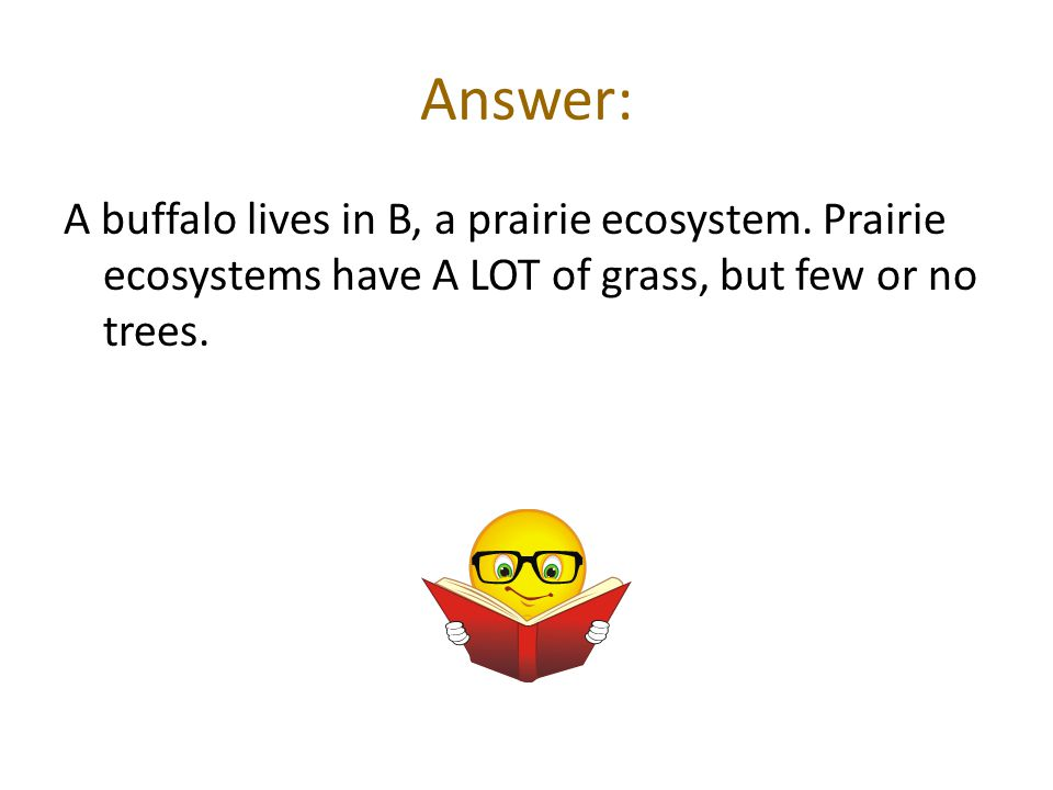 Answer: A buffalo lives in B, a prairie ecosystem.