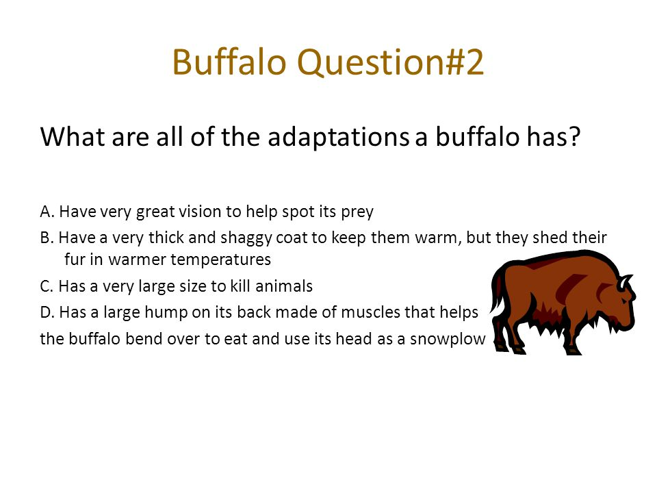 Buffalo Question#2 What are all of the adaptations a buffalo has