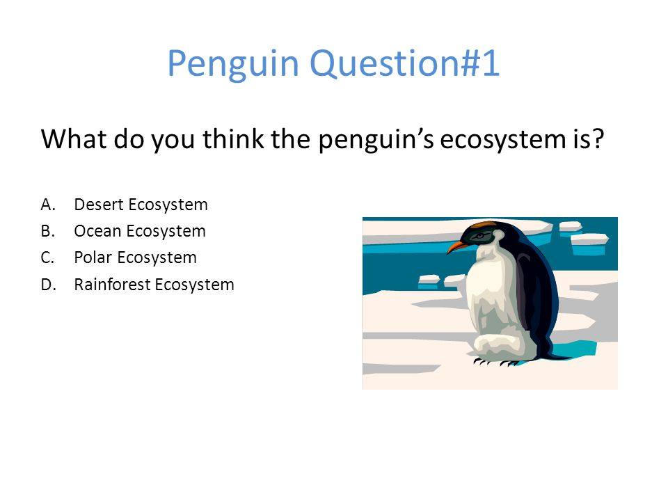 Penguin Question#1 What do you think the penguin's ecosystem is