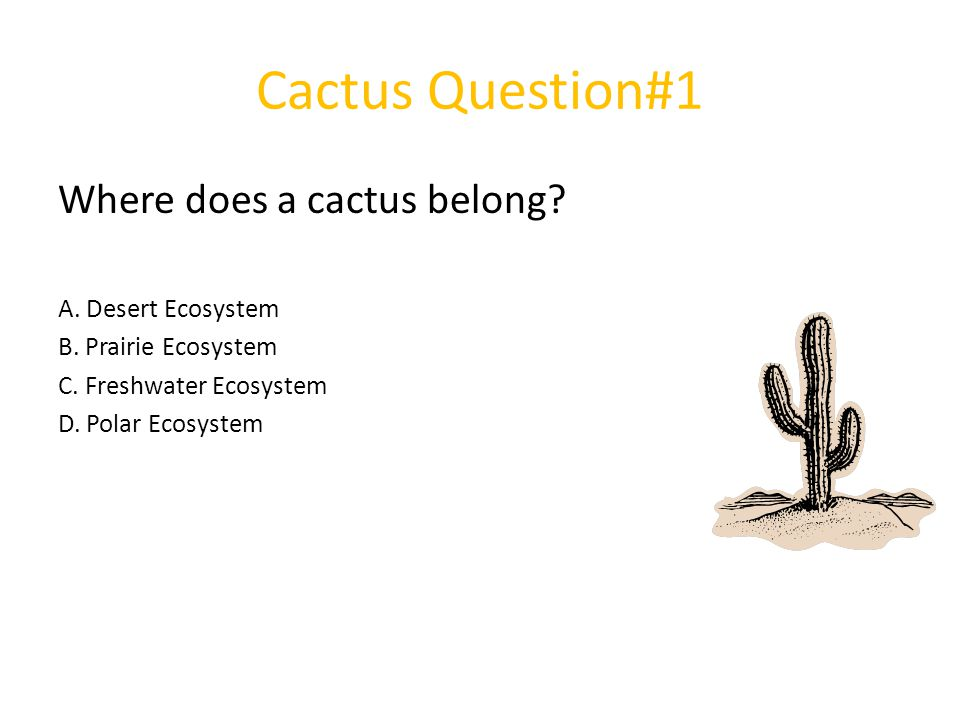 Cactus Question#1 Where does a cactus belong A. Desert Ecosystem