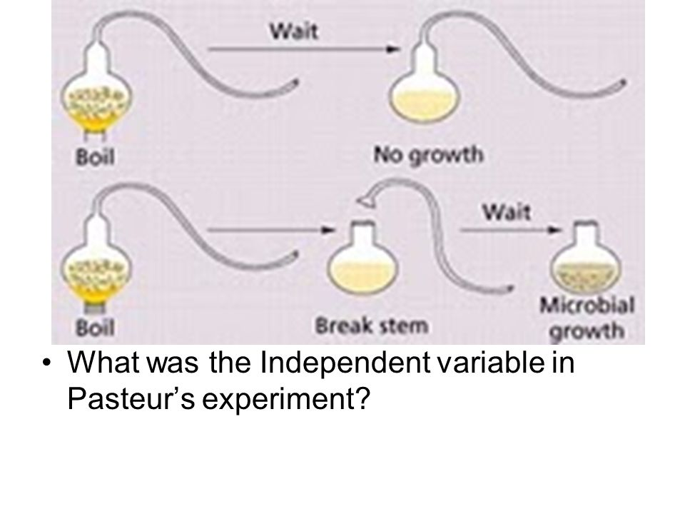 What was the Independent variable in Pasteur's experiment