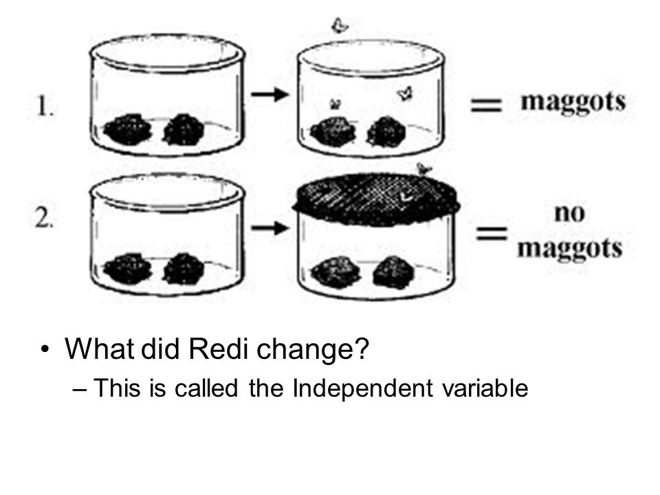 What did Redi change This is called the Independent variable