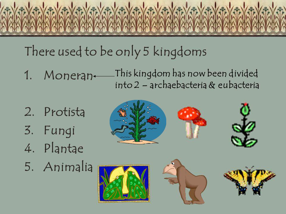 There used to be only 5 kingdoms Moneran Protista Fungi Plantae