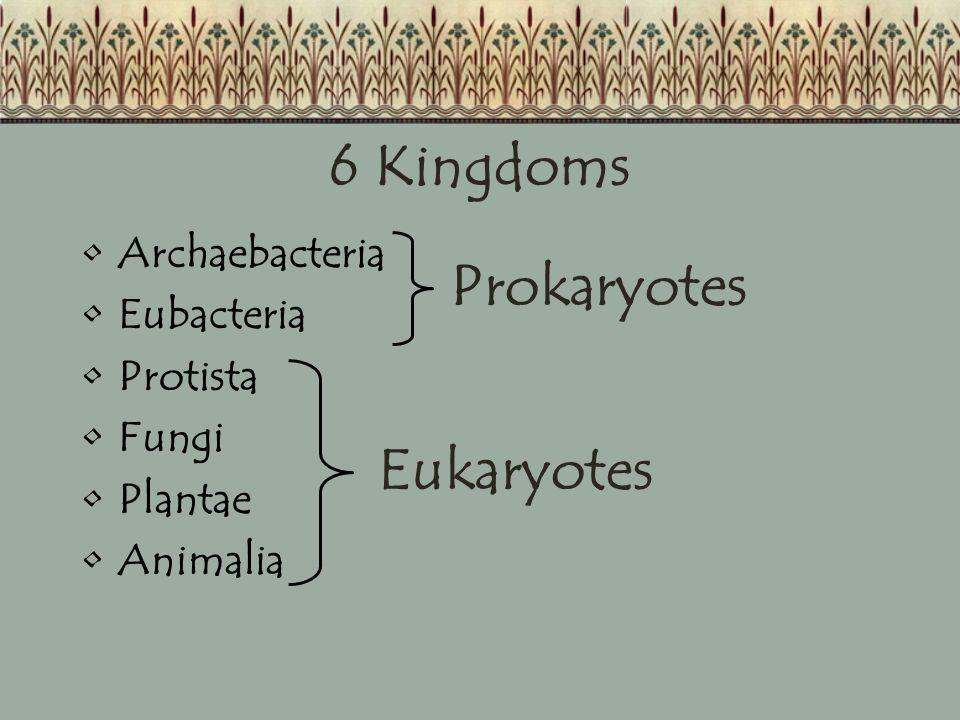 6 Kingdoms Prokaryotes Eukaryotes Archaebacteria Eubacteria Protista